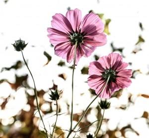 Schmerztherapie Konstanz: Bild mit Blumen